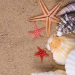 Starfish, seashells — Stockfoto