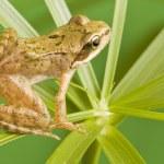 Frog — Stock Photo #3899119