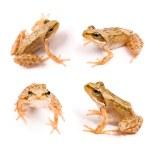 Frog — Stock Photo #3899120