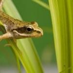 Frog — Stock Photo #3899123