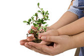 Tree in palm of hand — Stock Photo
