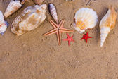 Sjöstjärnor, snäckskal — Stockfoto