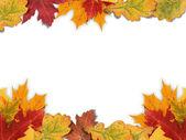 Mixed-Leaf Frame — Stock Photo
