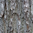 Tree bark - Stockfoto