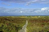 Way to the beach, Sylt, Germany — Stock Photo