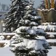 Winter park in Moscow — Stock Photo