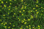 Green grass and yellow flowers — Stock Photo