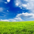 Stock Photo: Meadow