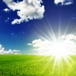 Field and sun — Stock Photo