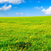 Campo verde primavera — Foto de Stock
