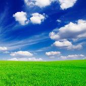Groene lente veld — Stockfoto
