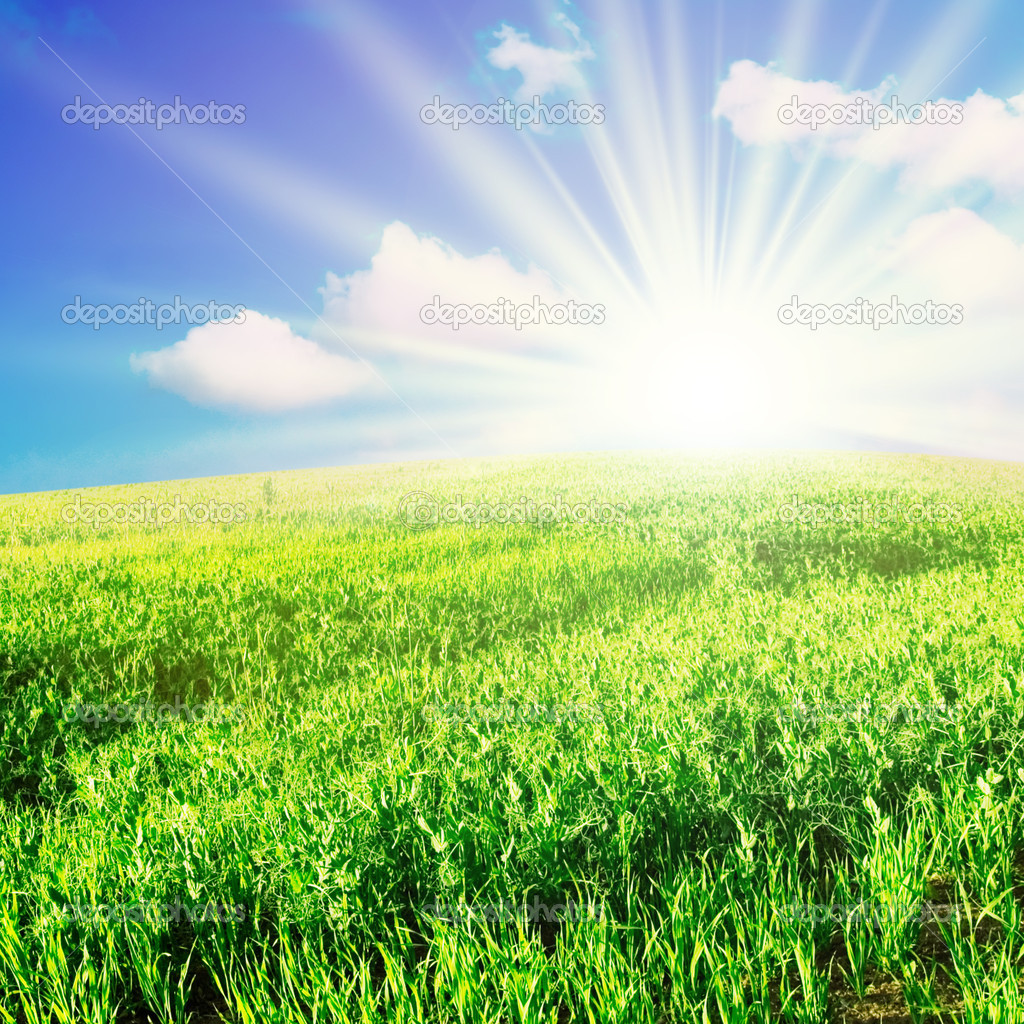 Field and sun — Stock Photo #2915021