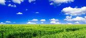 Bahar çayır — Stok fotoğraf