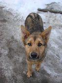 А nice dog — Stockfoto