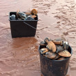 Stock Photo: Buckets of clams