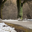 Stock Photo: Bench in winter