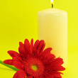 Stock Photo: Candle and Daisy on Yellow