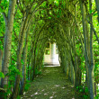 Green Tree Archway - Stock Photo