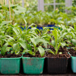 Green House Potted Plants — Stock Photo