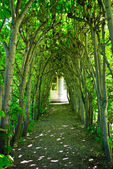 Green Tree Archway — Stock Photo
