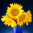 Bouquet of sunflowers in a blue vase — Stock Photo