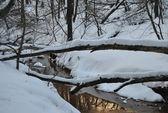 Winter forest in sundown — Stock Photo