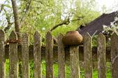 Pot on a fence — Stock Photo