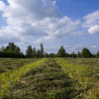 Field with oblique hay — Stock Photo #3287150