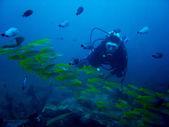 Aquarium diver — Stock Photo