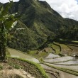 Stock Photo: Ifugao rice terraces