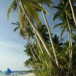 Boracay island beach palm trees — Stock Photo #2811945