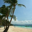 Boracay island beach palm trees — Stock Photo #2811965