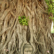 Stock Photo: Buddhas head banytree