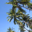 Palm canopy — Stock Photo