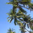 Palm canopy - Stock Photo