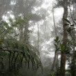 Cloud forest — Stock Photo