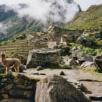 Alpaka Machi Picchu Ruinen peru — Stockfoto