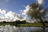 English meadow — Stock Photo