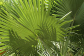 Tropical vegetation — Stock Photo