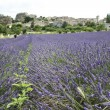Lavender fields provence france — Stock Photo