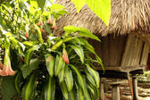 Ifugao hut — Stock Photo
