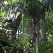Monkey forest — Stock Photo #2911022
