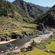 Stockfoto: Rice terraces
