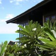 Koh samui beach resort - Stock Photo