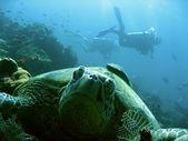 Turtle divers — Stock Photo