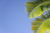 Blue sky palm — Stock Photo