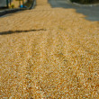 Grain highway — Stock Photo