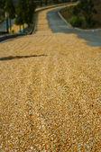 Grain highway — Stock Photo