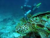 Turtle watching — Stock Photo