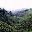 Tea plantation cameron highlands — Stock Photo